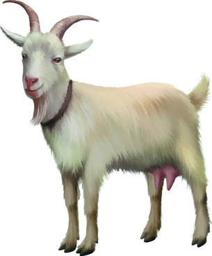 305x368 Goat Free Vector Download (138 Free Vector) For Commercial Use