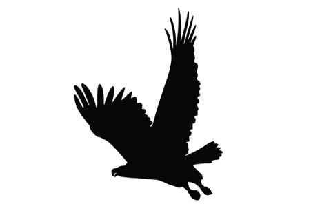 480x309 Flying Eagle Silhouette Vector Silhouettes Vector
