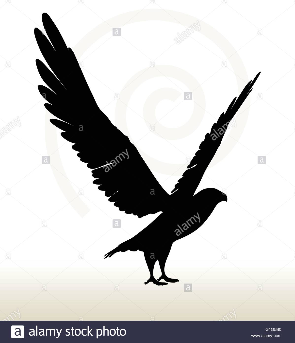 1198x1390 Bald Eagle Stock Vector Images