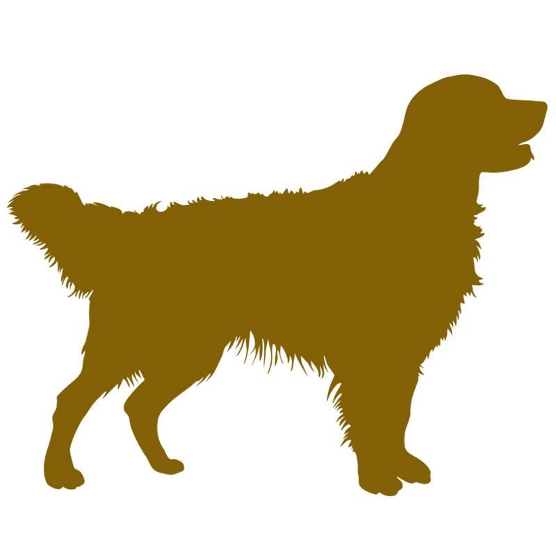 800x800 Golden Retriever Pet Markers