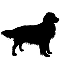 200x200 Golden Retriever Icon