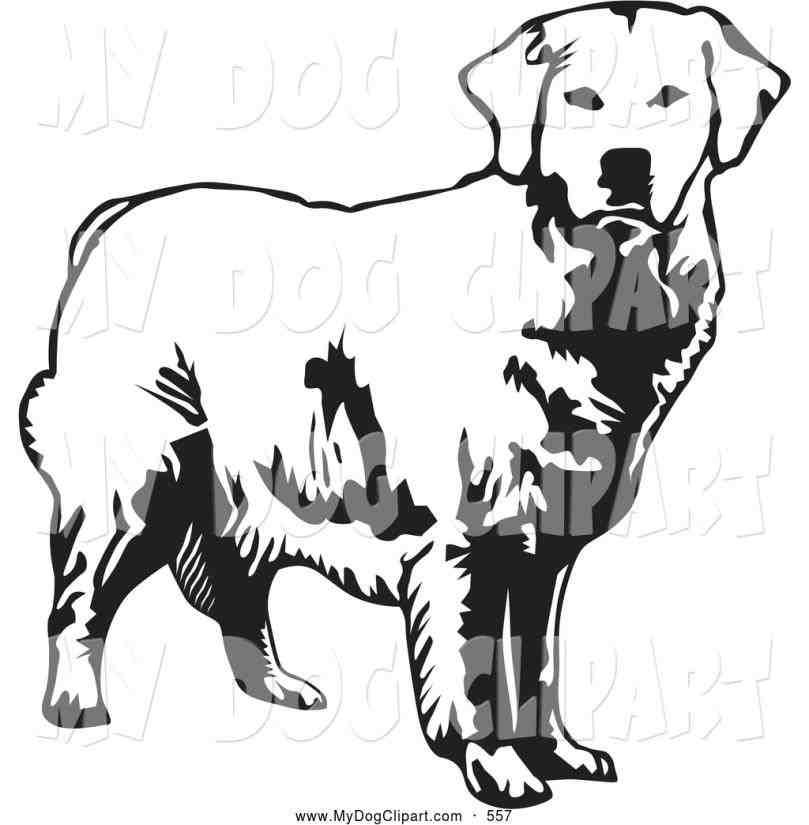 809x825 Retriever Dog Vector Image Stockunlimited Silhouette Clip Art