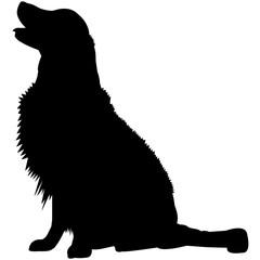 240x240 Golden Retriever Dog Photos, Royalty Free Images, Graphics