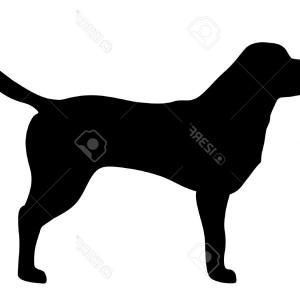 300x300 Stock Photo Golden Retriever Dog Silhouette Side View Vector