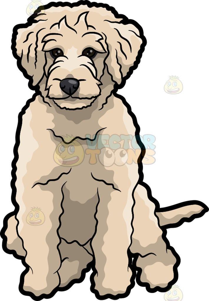 710x1024 A Sad Golden Doodle Dog Golden Doodle Dog, Doodle Dog And Golden