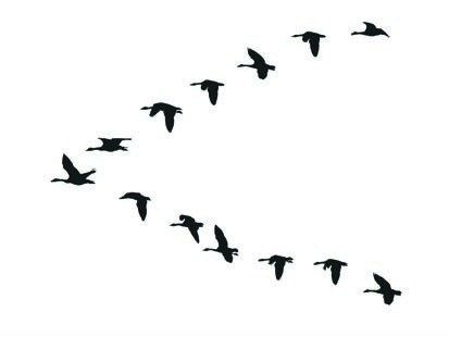 413x310 Flock Of Birds Clipart Goose
