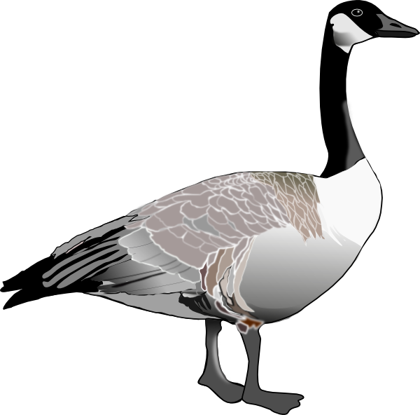 600x592 Free Canada Goose Clipart