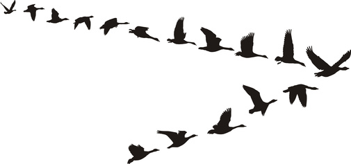 505x237 Goose Clipart V Formation Many Interesting Cliparts