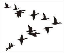 220x184 Flock Of Ducks
