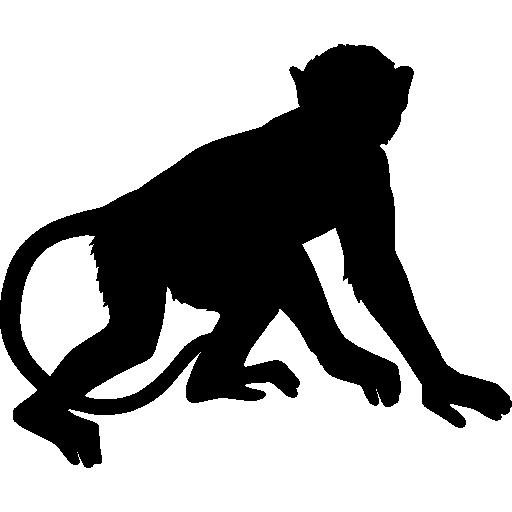 512x512 Monkeys, Chimps, Monkey, Brazil Set, Chimp, Animal, Animals