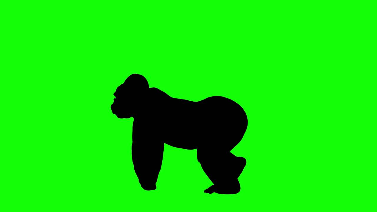 1280x720 Free Hd Video Backgrounds Animal Silhouette Gorilla Walking