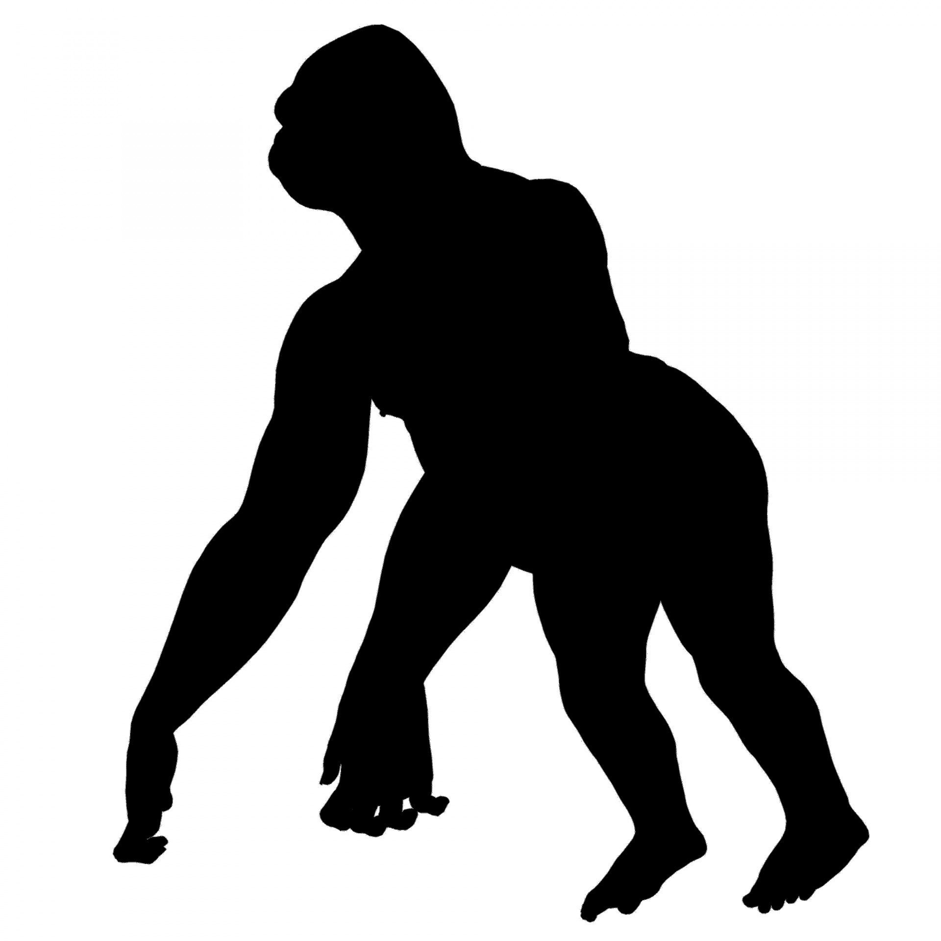 1920x1920 Gorilla Free Stock Photo