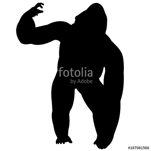 500x500 Gorilla Stock Image And Royalty Free Vector Files