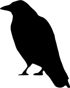 240x300 Crow Standing By @peileppe, Animal, Animal, Bird, Bird, Black