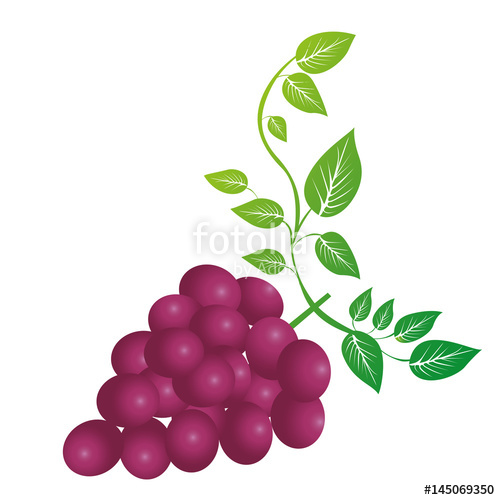 500x500 Colorful Silhouette Of Bunch Of Grapes With Branch And Leaves