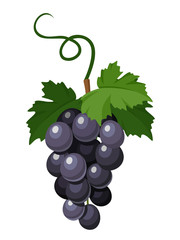 180x240 Black Silhouette Of Grapes. Vector Illustration.