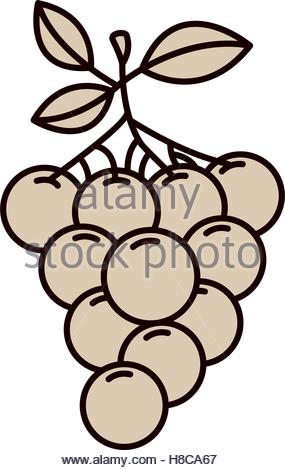 285x470 Monochrome Silhouette Of Bunch Of Grapes Stock Vector Art