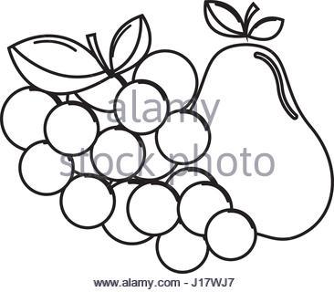 366x320 Silhouette Fresh Grape Fruit Stock Vector Art Amp Illustration