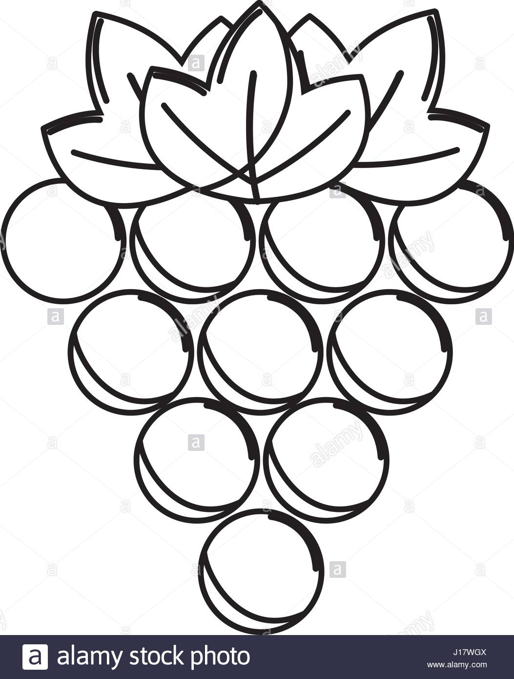 1053x1390 Silhouette Grapes Fruit Icon Image Stock Vector Art Amp Illustration
