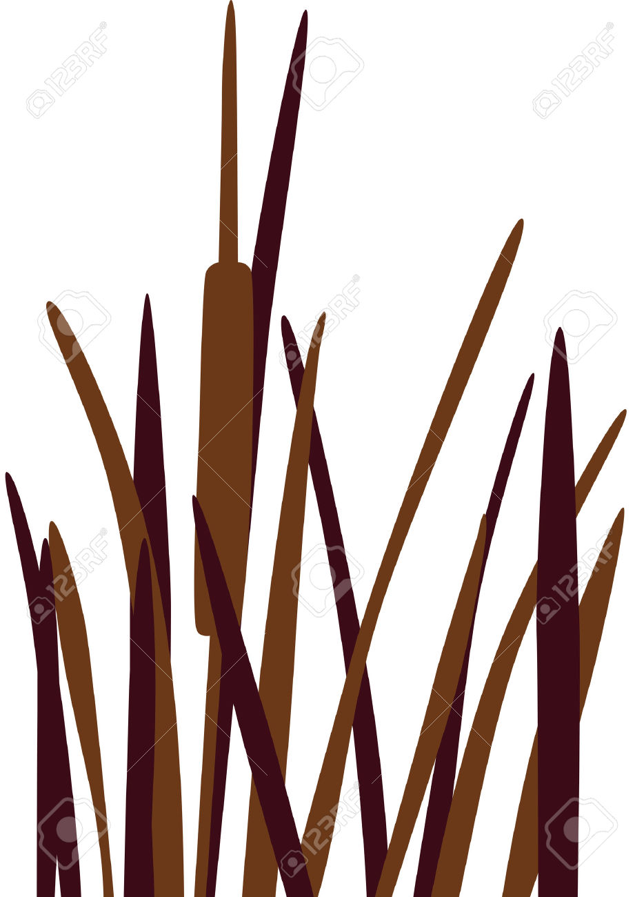921x1300 Grass Clipart Cattail