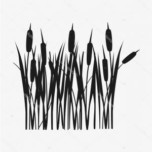 300x300 Grassy Black Vector Arenawp