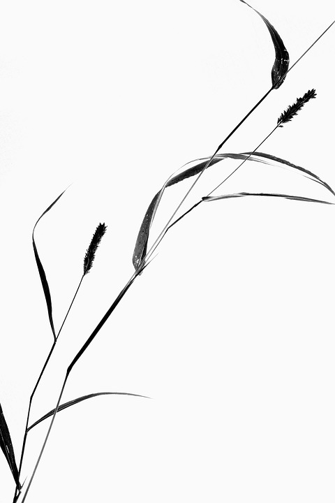 480x720 Free Photo Still Life Grass Plant Silhouette