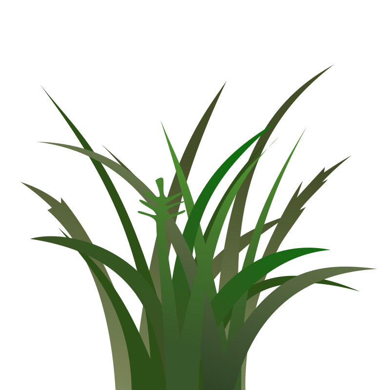 800x800 Gras Animated Clipart