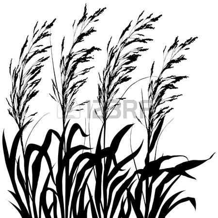 450x450 Ornamental Grass Clipart
