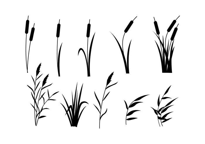 700x490 Free Reeds Vector