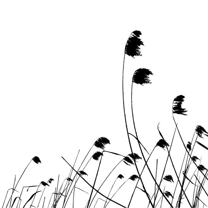 700x700 Real Grass Silhouette