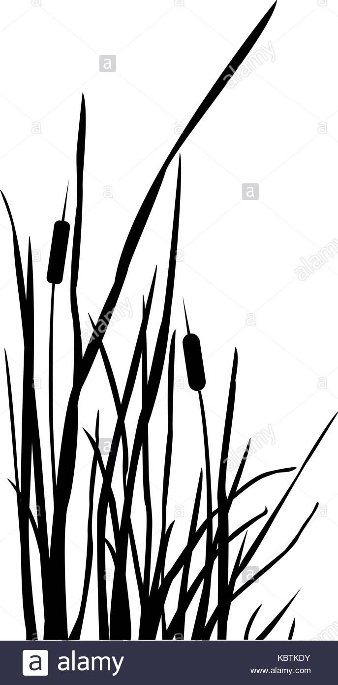 687x1390 Tall Grass Stock Vector Images