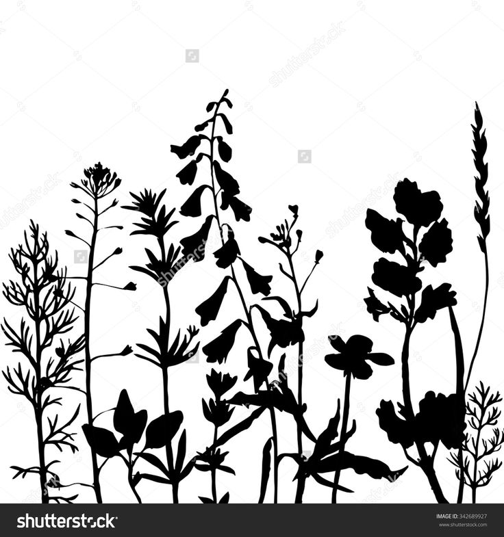 736x785 25 Best Plant And Grass Silhouettes Images