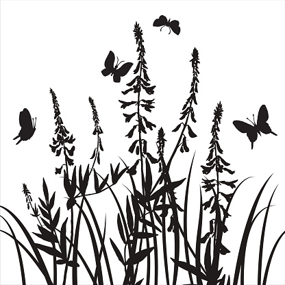 416x416 Vector Silhouettes Of Flowers And Grass With Butterflies Vector