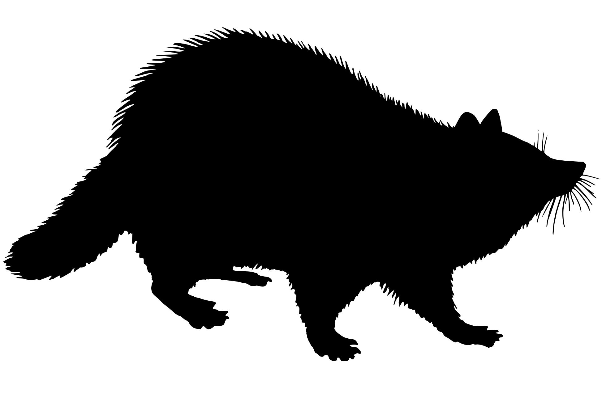 1946x1330 Racoon Silhouette Clipart