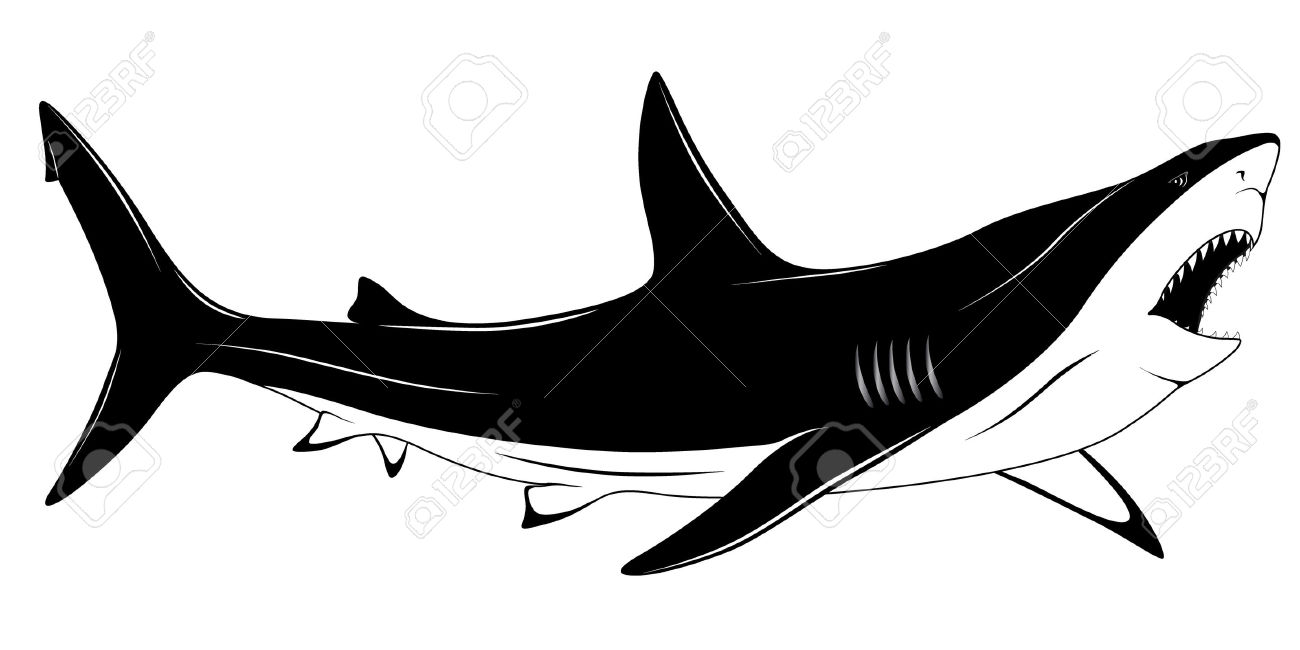 1300x650 Great White Shark Clipart Mouth Open Drawing Many Interesting Cliparts