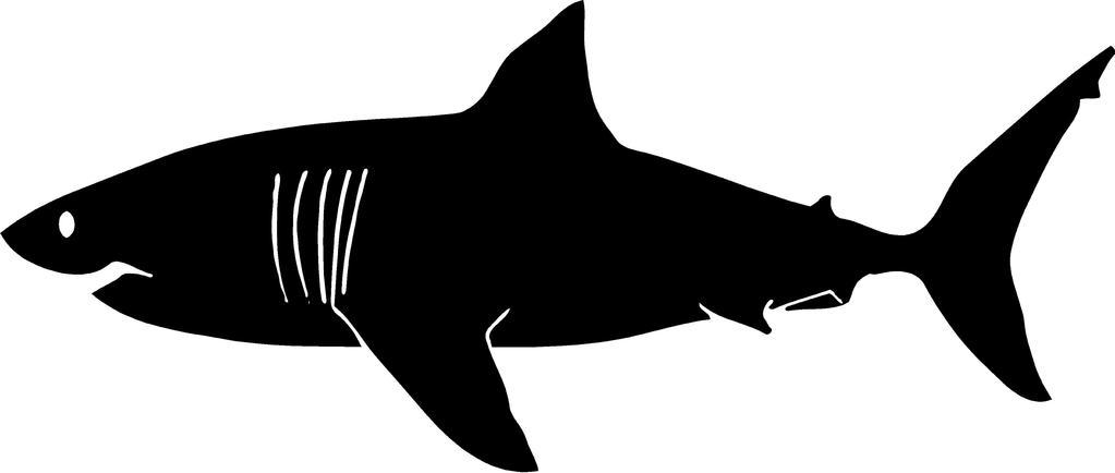 1023x434 Great White Shark Wall Decal Large Shark Home Decor Kids Room Huge