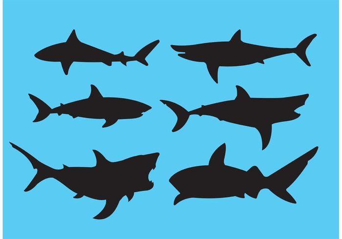 700x490 Great White Shark 124395