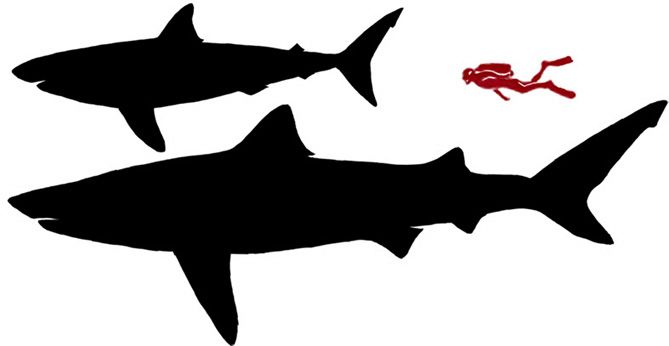 669x346 Great White Shark Silhouette