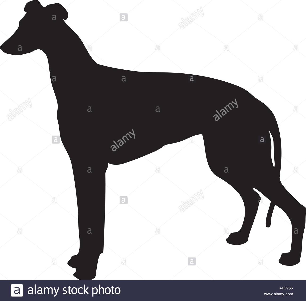 1300x1279 Greyhound Stock Vector Images