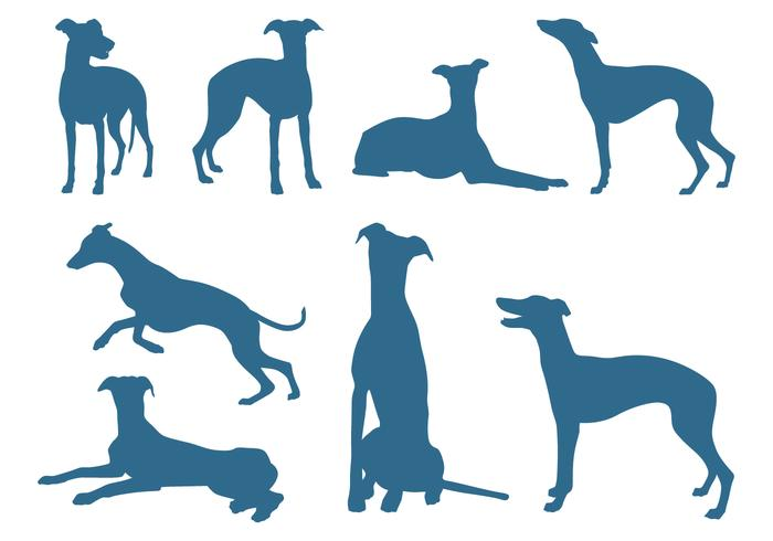 700x490 Silhouettes Of Greyhound Dogs