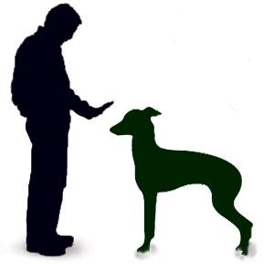300x298 Greyhound Information