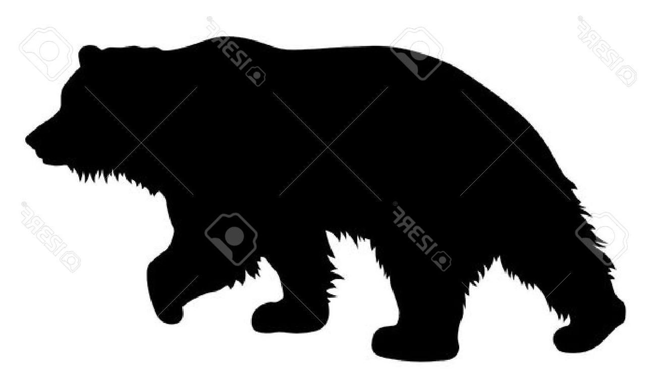 1300x757 Top 10 Vector Illustration Of Brown Bear Silhouette Stock Grizzly