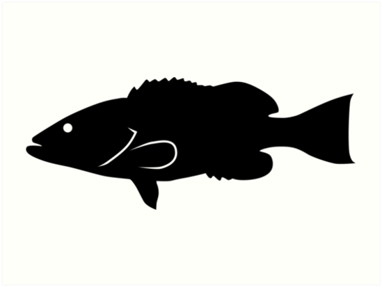 549x413 Gag Grouper Fish Silhouette (Black) Art Prints By