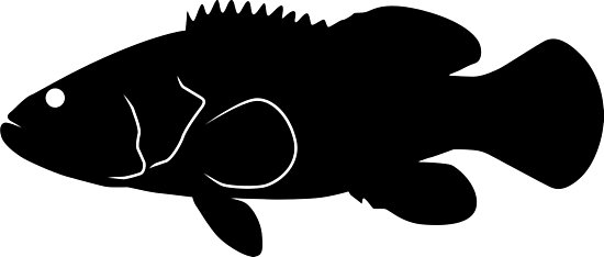 550x234 Goliath Grouper Fish Silhouette (Black) Photographic Prints By