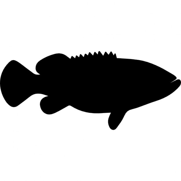 626x626 Goliath Grouper Fish Shape Icons Free Download