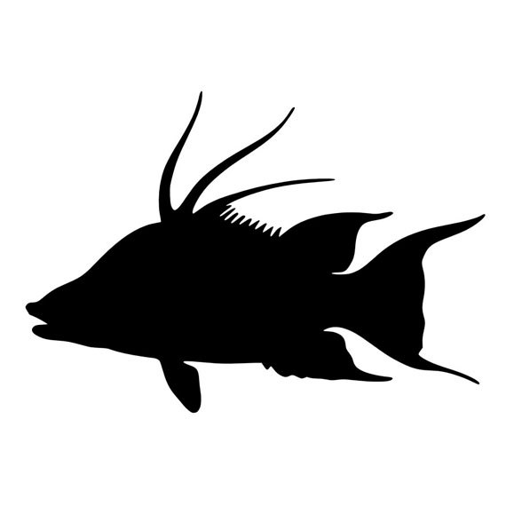 570x570 Hogfish Vinyl Diecut Decal Fishing Car Truck Window Laptop