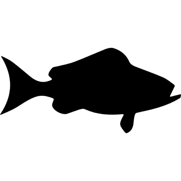 626x626 Fish Black Grouper Side View Icons Free Download