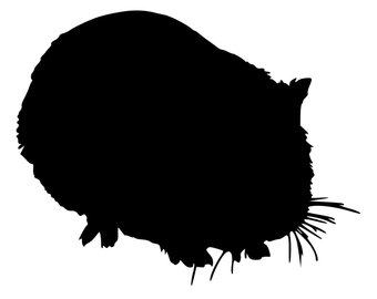 340x270 Guinea Pig Car Decal Etsy