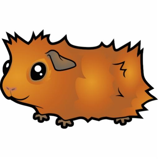 512x512 Cartoon Guinea Pig Jessica's Board Cartoon