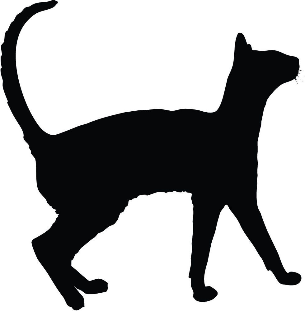980x1000 Images For Gt Sitting Cat Silhouette Looking Up Politics